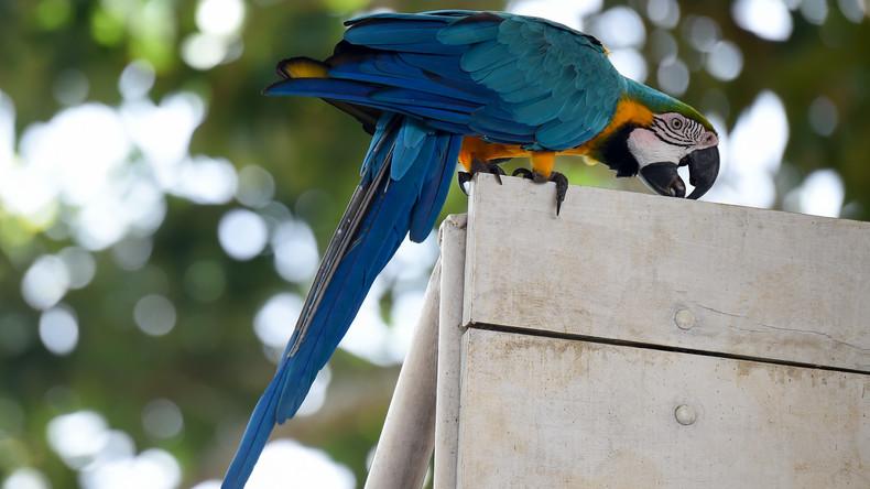 Schräger Vogel: Entflogener Papagei beleidigt Feuerwehrmann, als er ihn vom Dach holt