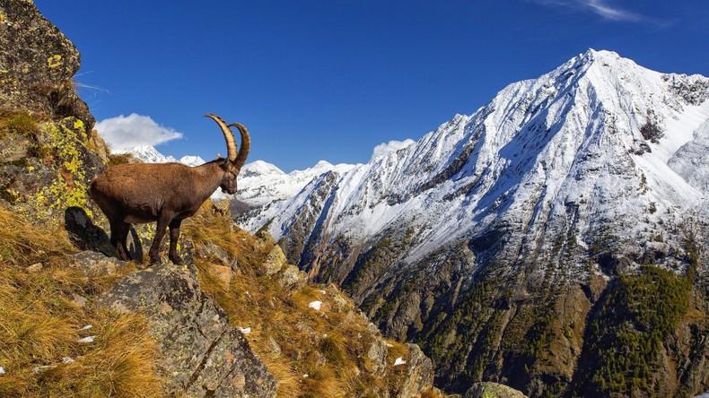 Studie: Die Alpen wandern nach Norden - und werden höher
