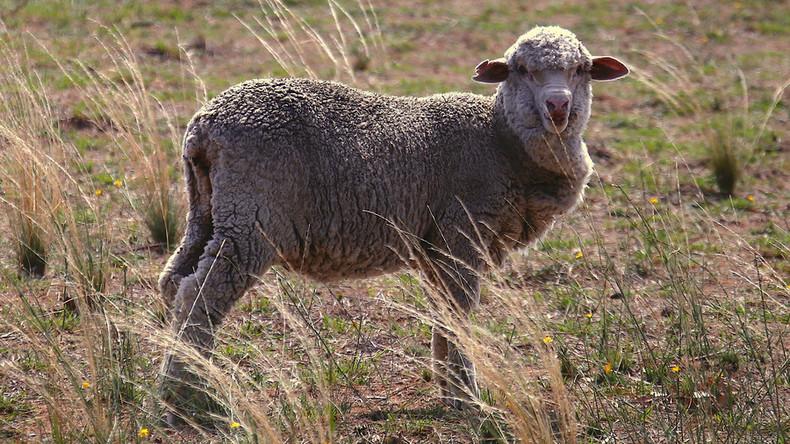 Israels Atomwaffen: Radioaktive Schafe erhärten Verdacht eines Tests vor fast 40 Jahren