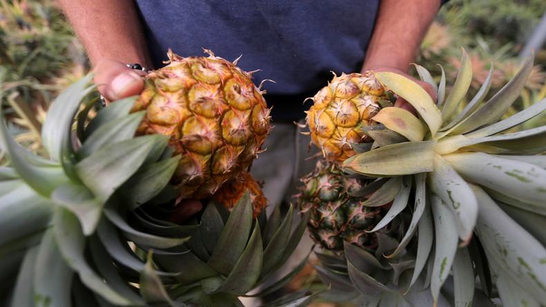 Gefüllte Ananas aus Drogenküche: Spanische Polizei beschlagnahmt 67 Kilo Kokain