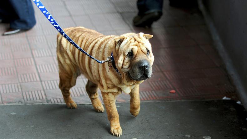 Schottland: Tierärzte entfernen 20 Zentimeter langen Kebab-Spieß aus Hundemagen