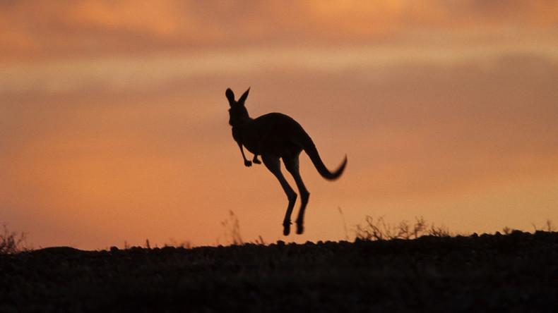 Austria oder Australia: Känguru auch in Österreich gesichtet