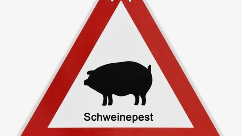 Belgien: Afrikanische Schweinepest nahe deutscher Grenze nachgewiesen