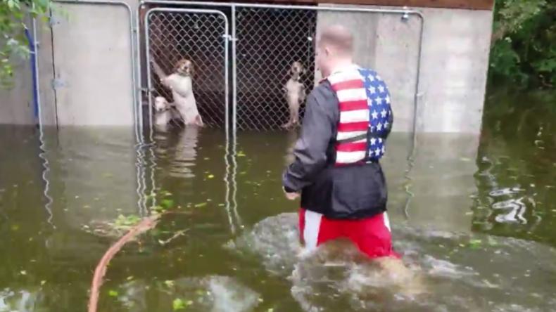 USA: Im Zwinger Sturm Florence überlassen – Mann rettet mehrere Hunde aus überschwemmten Käfig