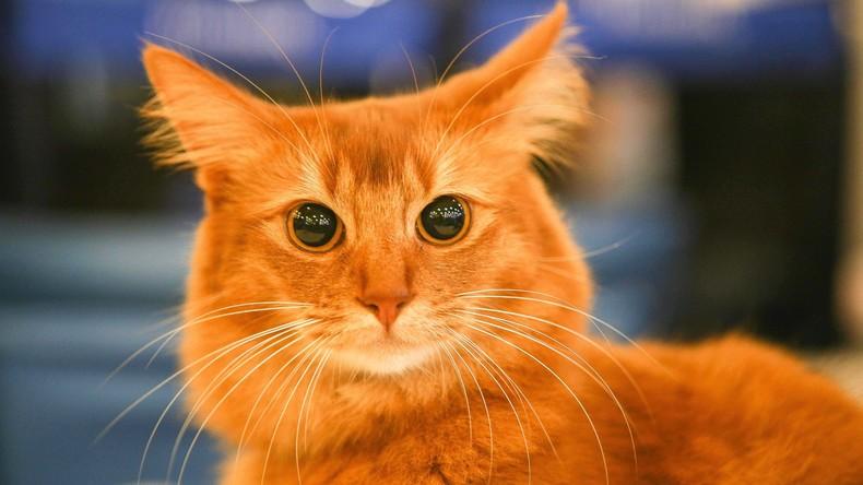 Geheimes Katzen-Kartell? Mietze bringt Drogen nach Hause, Herrchen verpfeift sie an Polizei