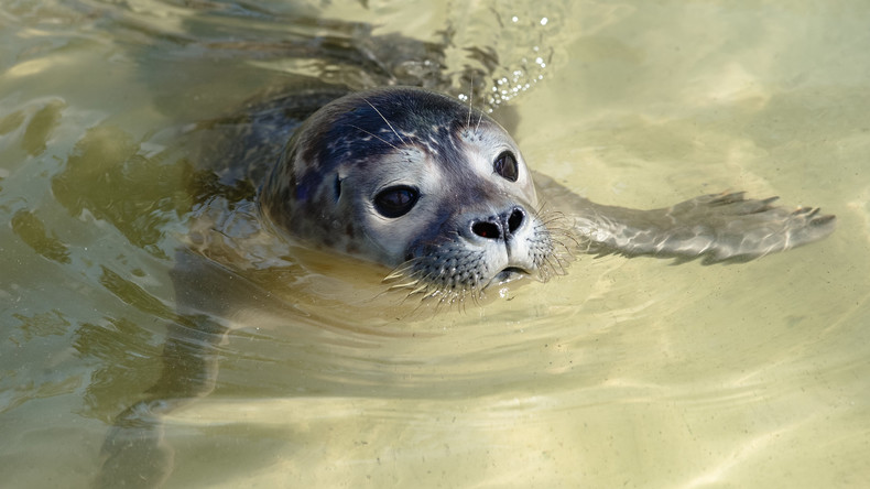 Neuseeland: Seehund klatscht Paddler Oktopus ins Gesicht