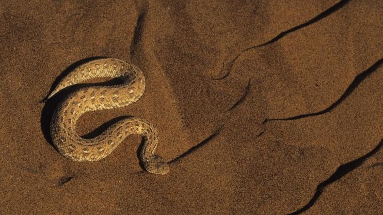 """""""Größter Schock des ganzen Lebens"""": Britin entdeckt afrikanische Schlange im Backofen"""