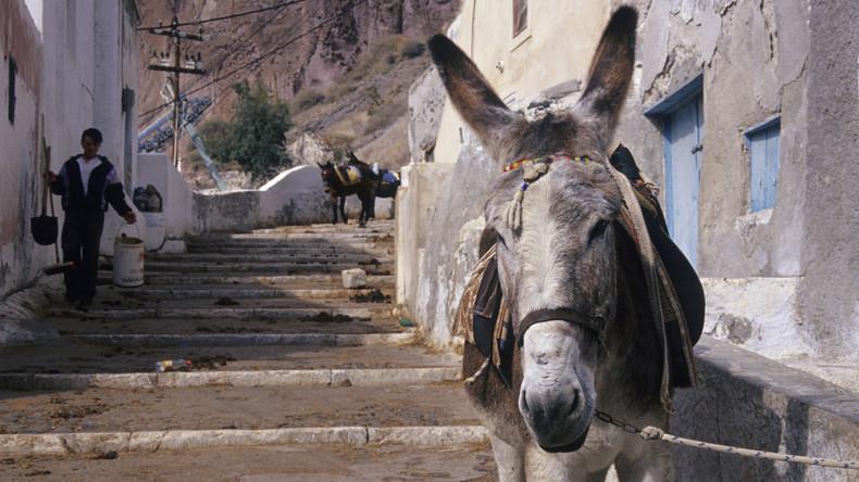 Zu schwere Last für Esel - Griechenland verbietet übergewichtigen Touristen Grautiere zu reiten