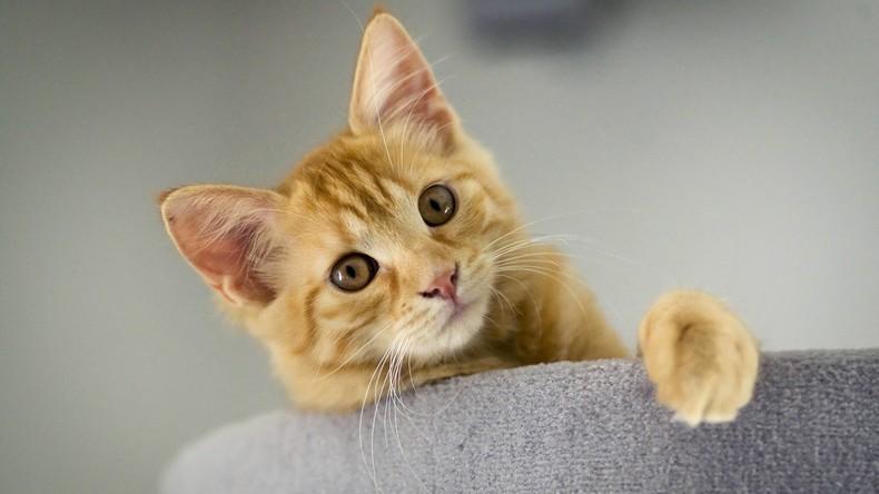 US-Botschaft verschickt Bild mit einer Katze im Krümelmonster-Kostüm