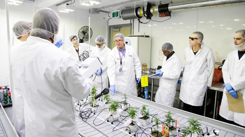 Kanada legalisiert Cannabis – und bildet erste Fachkräfte für neue Industrie-Branche aus