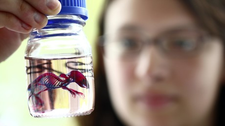 Babies von zwei Müttern: Wissenschaftler zeugen gesunde Nager von Mäuseweibchen (Symbolbild)