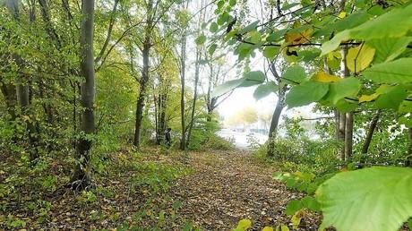 In diesem Waldstück soll sich die Tat am 14. Oktober ereignet haben.