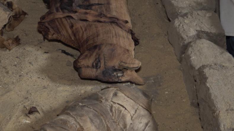 Seltsamer Fund in Ägypten: Mumifizierte Katzen und Skarabäen gefunden