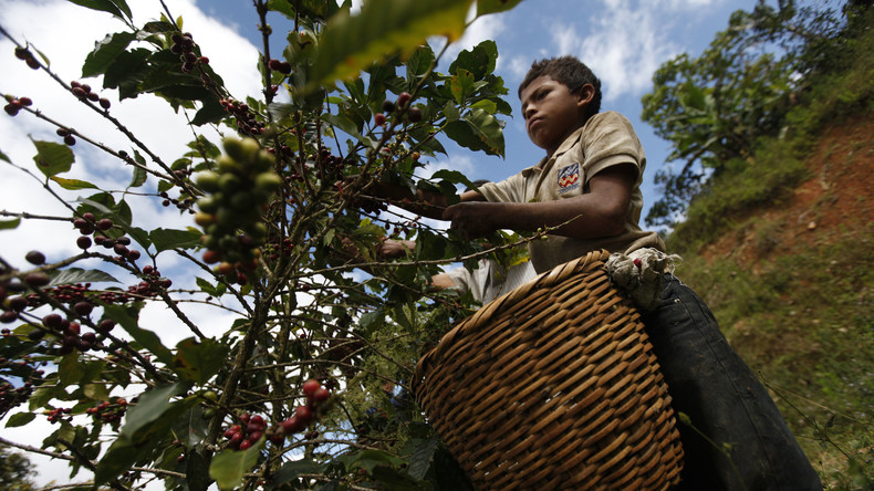 """Präsident von Honduras ruft zum """"Kreuzzug"""" gegen niedrige Kaffeepreise auf"""