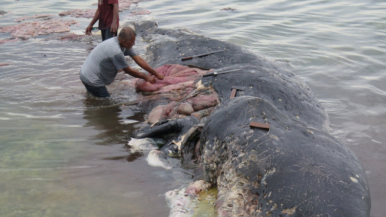 Tödliches Mahl: Toter Wal mit sechs Kilo Plastik im Bauch an indonesischer Küste gefunden
