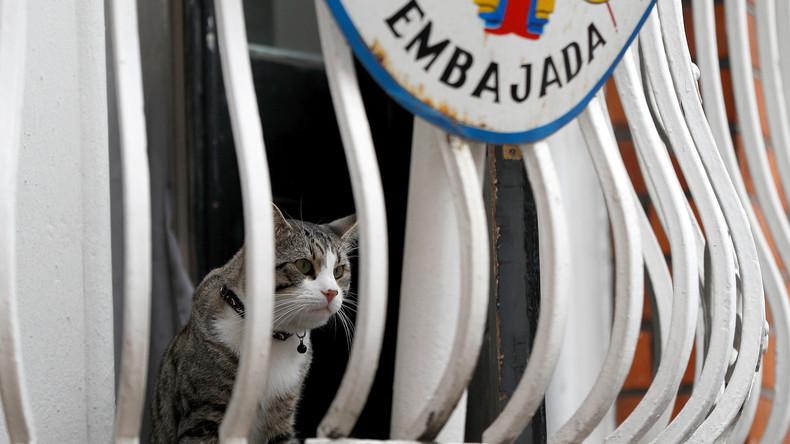 """""""Sie werden sich in Frieden wiedervereinigen"""": Assange trennt sich nach Mahnung von seinem Kater"""