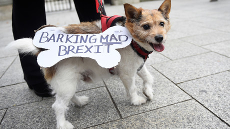 Brexit für Haustiere: Großbritannien veröffentlicht Empfehlungen für Besitzer bei No-Deal-Szenario