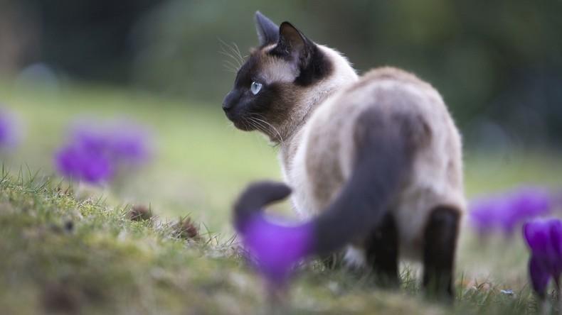 Katze trifft Besitzer nach einem Monat auf Brandstätte in Kalifornien wieder