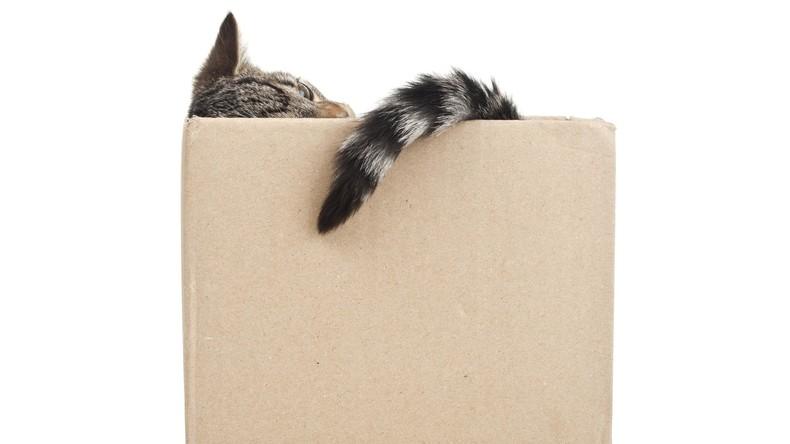 Tierische Grüße: Frauchen verschickt versehentlich ihre Katze mit der Post