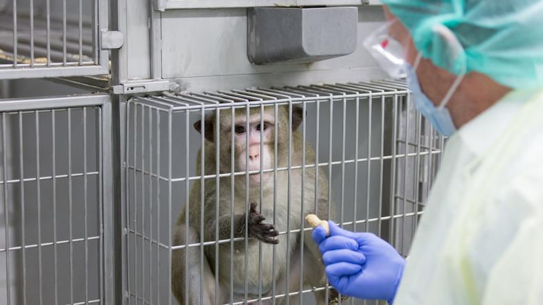 Traurige Bilanz: Rund 2,8 Millionen Tiere bei Tierversuchen benutzt oder getötet