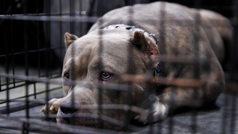 Neues russisches Gesetz verbietet Töten sowie Misshandeln von Tieren und beschränkt Streichelzoos