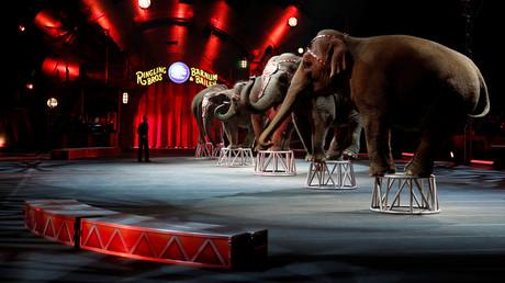 New Jersey verbietet als erster US-Bundesstaat Zirkusnummern mit Wildtieren (Symbolbild)