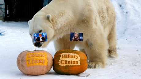 Beweis für die russische Einmischung: Der Bär Felix aus dem Zoo Rojew Ruchej im sibirischen Krasnojarsk entschied sich im Vorfeld der US-Wahlen 2016 für Donald Trump.