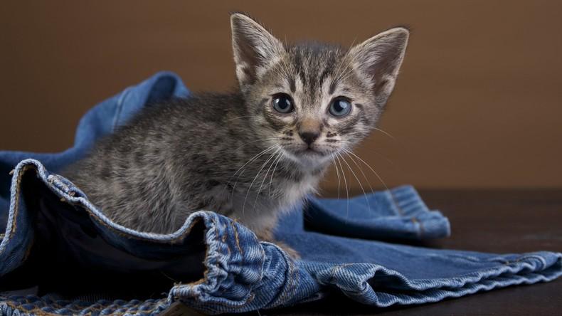 Miauende Hose: Singapurische Zollbeamte erwischen Schmuggler mit vier Kätzchen