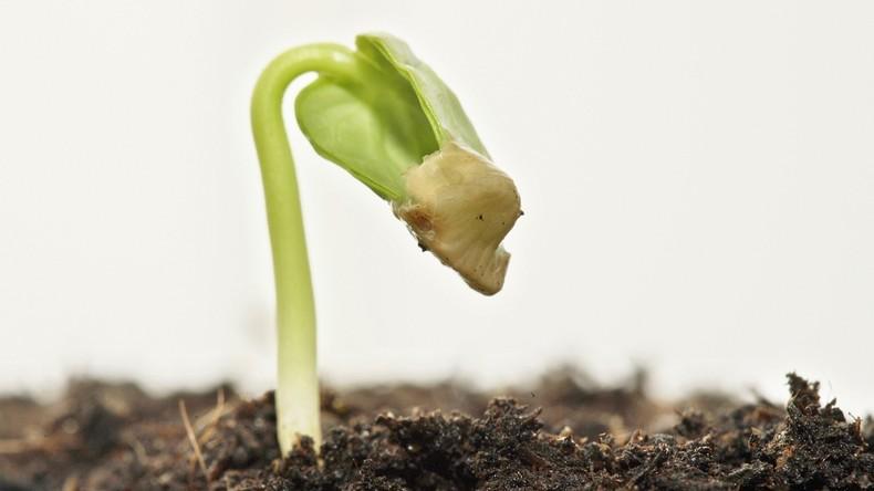 Erste-Keimpflanze-auf-dem-Mond-eingegangen
