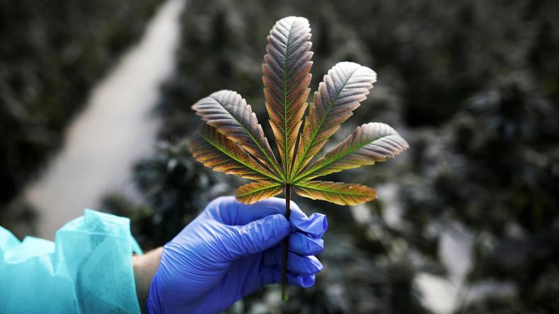 Israel erlaubt Export von medizinischem Cannabis