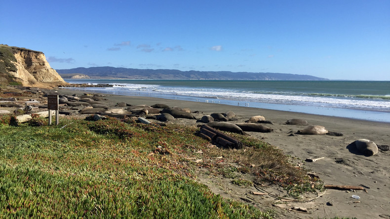 "Folge des ""Shutdowns""? Robben kapern leeren Strand in Kalifornien"