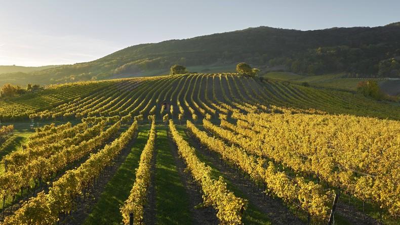Österreich weltweit Spitze bei ökologischer Landwirtschaft