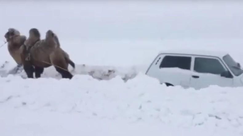 Geländewagen festgefahren? Zeit für ein Kamel (Video)