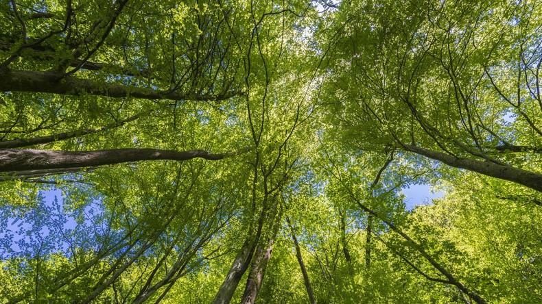 Erde wird wieder grüner - China und Indien wichtigste Akteure
