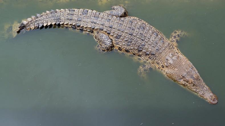 Malaysia: Mann muss zusehen, wie Krokodil seinen Onkel auffrisst