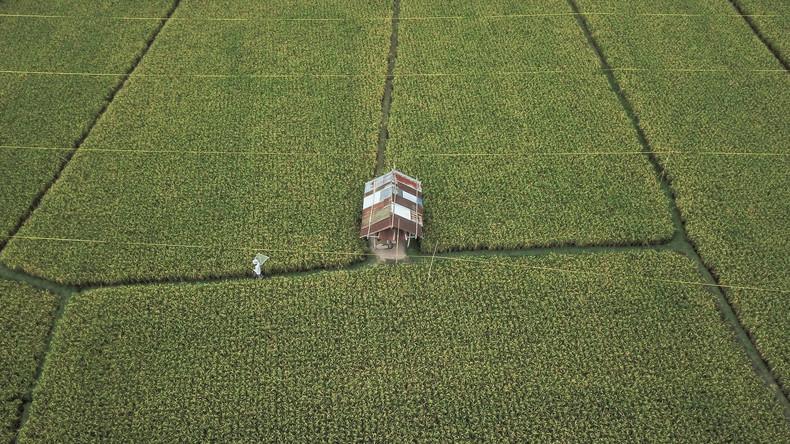 Resistent gegen Dürre und Hochwasser: China erschließt Ackerland im großen Maßstab