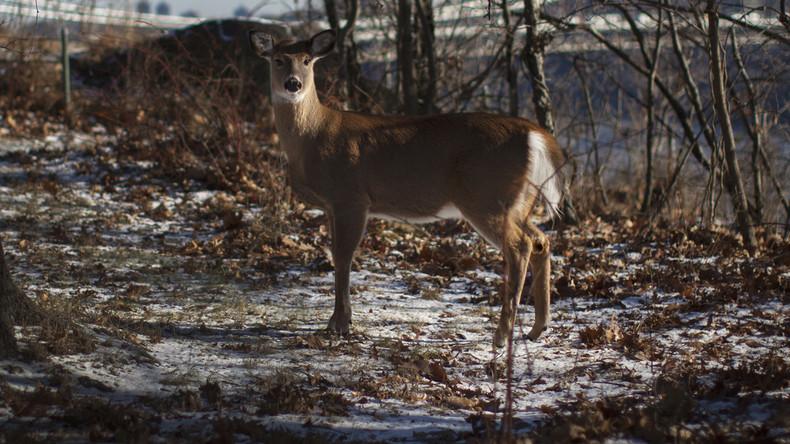 Mysteriöse Krankheit rafft Wildtiere dahin: Wenn Bambi plötzlich zu einem Zombie wird