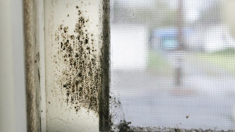 Hausbesuche auf US-Stützpunkten in Europa: Schimmel, Ratten und andere Probleme