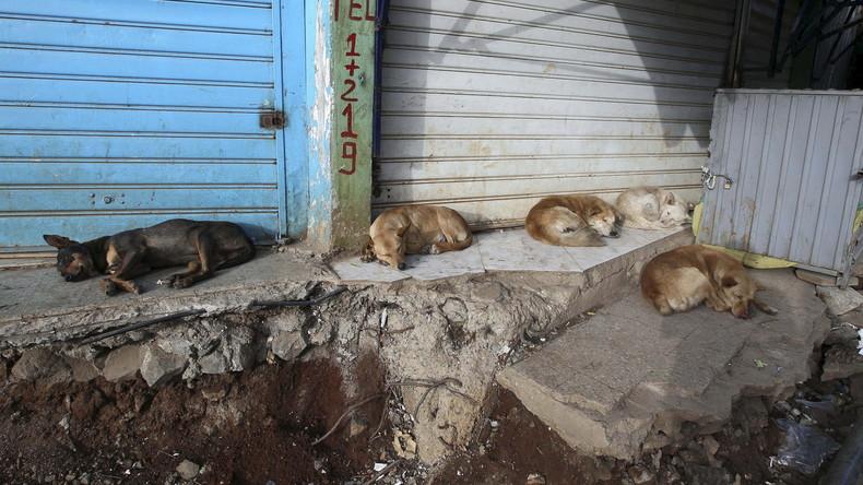 Angst vor Tollwut in Addis Abeba: Stadt schläfert 8.400 Hunde ein