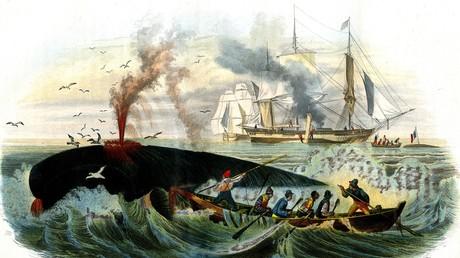Australische Archäologen entdecken alte Gravuren von US-Walfängern (Symbolbild)