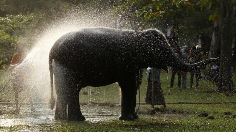 Karma? Elefant zerdrückt Tierpfleger, der ihn auspeitschte