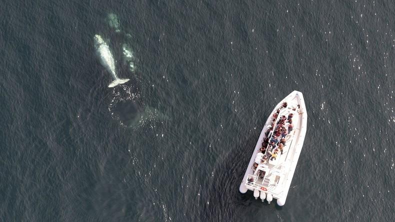 Japan: Fähre kollidiert mit Meerestier – über 80 Verletzte