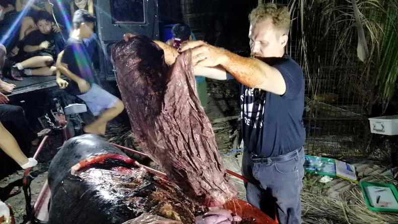 Toter Wal mit 40 Kilogramm Plastik im Bauch gefunden