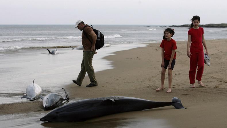 Hunderte tote Delfine an Frankreichs Küste seit Jahresbeginn – Fischerei als mögliche Ursache