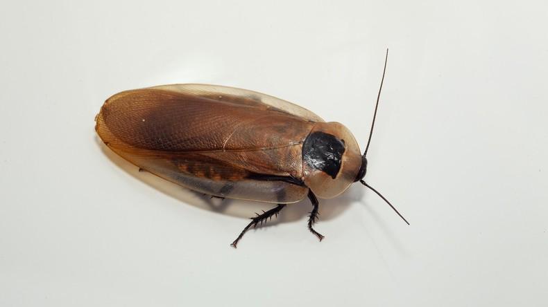 Mann wirft Schuh nach Kakerlake – Schuss in eigenen Fuß