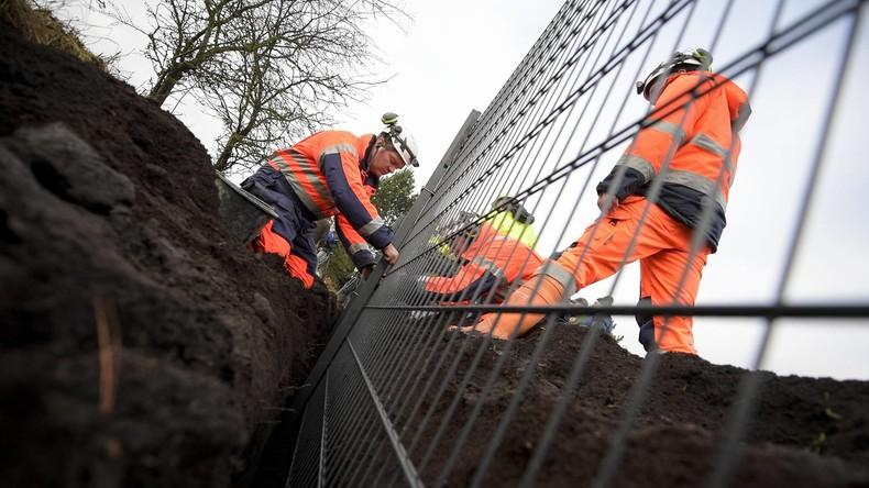 Gegen Afrikanische Schweinepest: Luxemburg errichtet Zaun zu Belgien