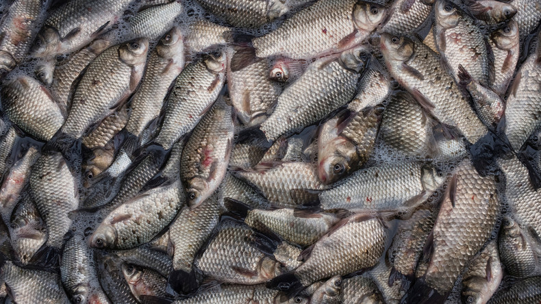 Acht Tonnen Fischreste landen auf Straße: LKW-Fahrer muss bis zu 2.000 Euro Strafe zahlen