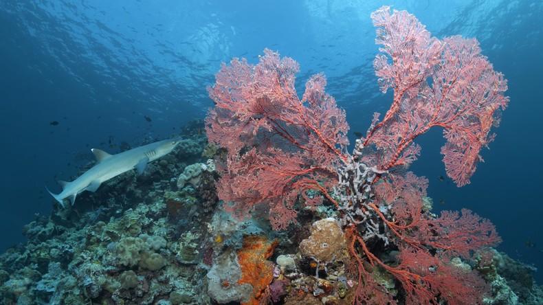 Hai verletzt 25-Jährigen im Great Barrier Reef schwer