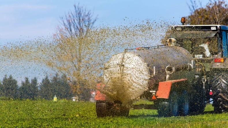Stinkt gewaltig: Bauern verjagen Partylöwen mit Gülle vom Feld