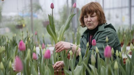 Symbolbild: Tulpen für den Internationalen Frauentag, Kiew, Ukraine, 4. März 2016.